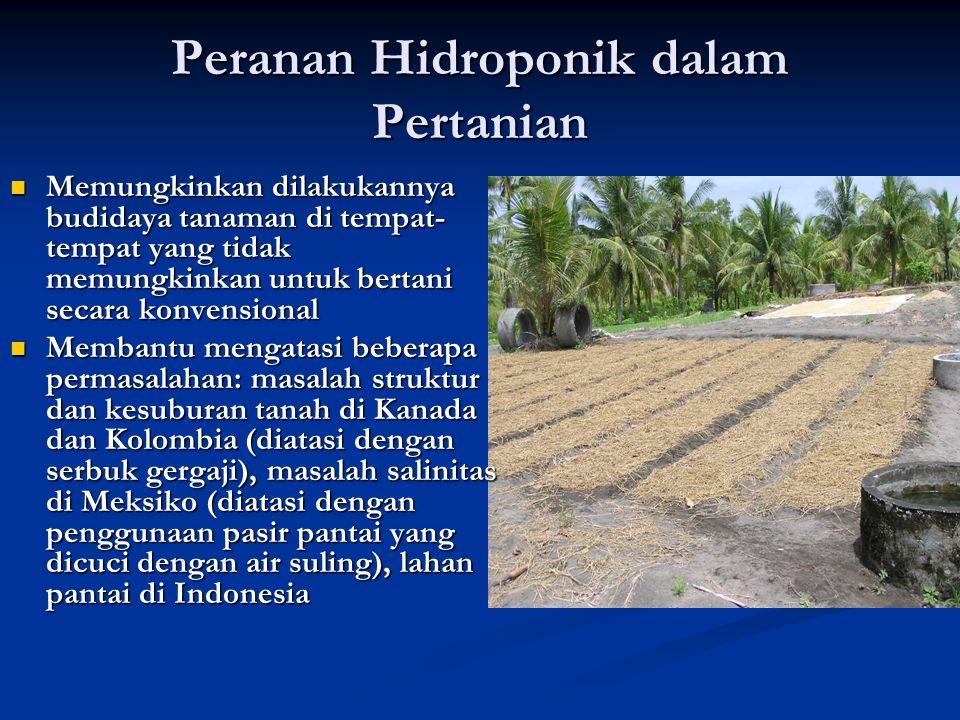 Peranan Hidroponik dalam Pertanian