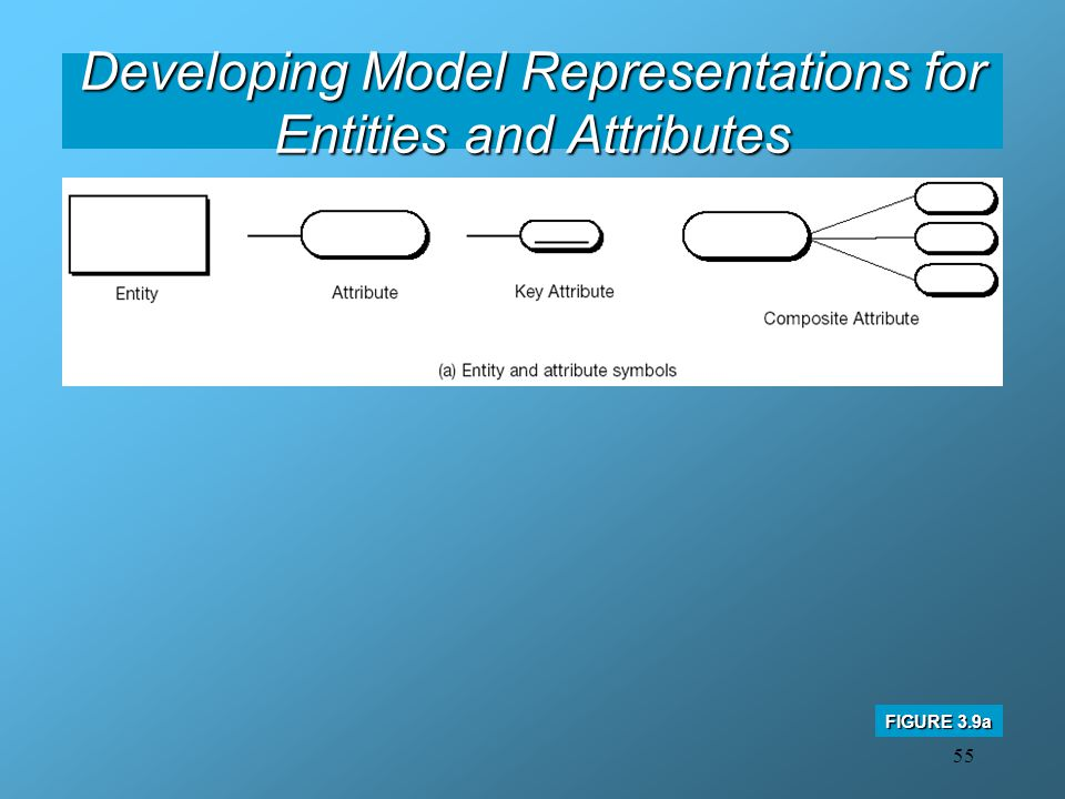 Developing Model Representations for Entities and Attributes