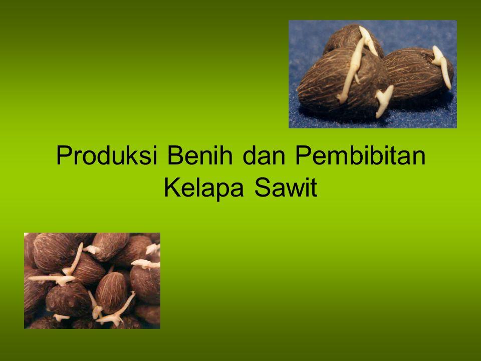 Produksi Benih dan Pembibitan Kelapa Sawit