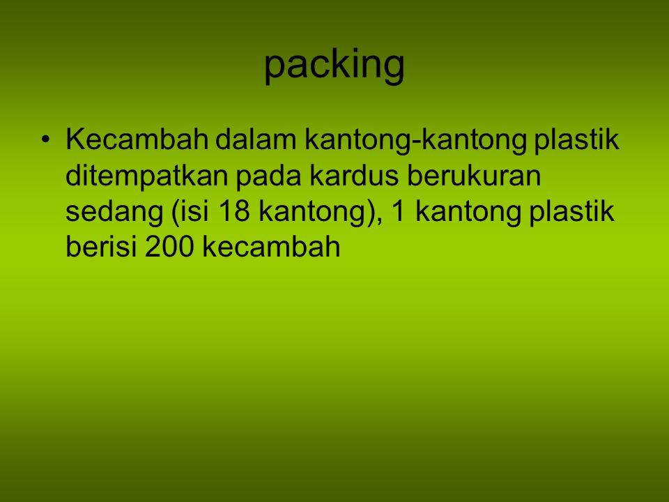 packing Kecambah dalam kantong-kantong plastik ditempatkan pada kardus berukuran sedang (isi 18 kantong), 1 kantong plastik berisi 200 kecambah.