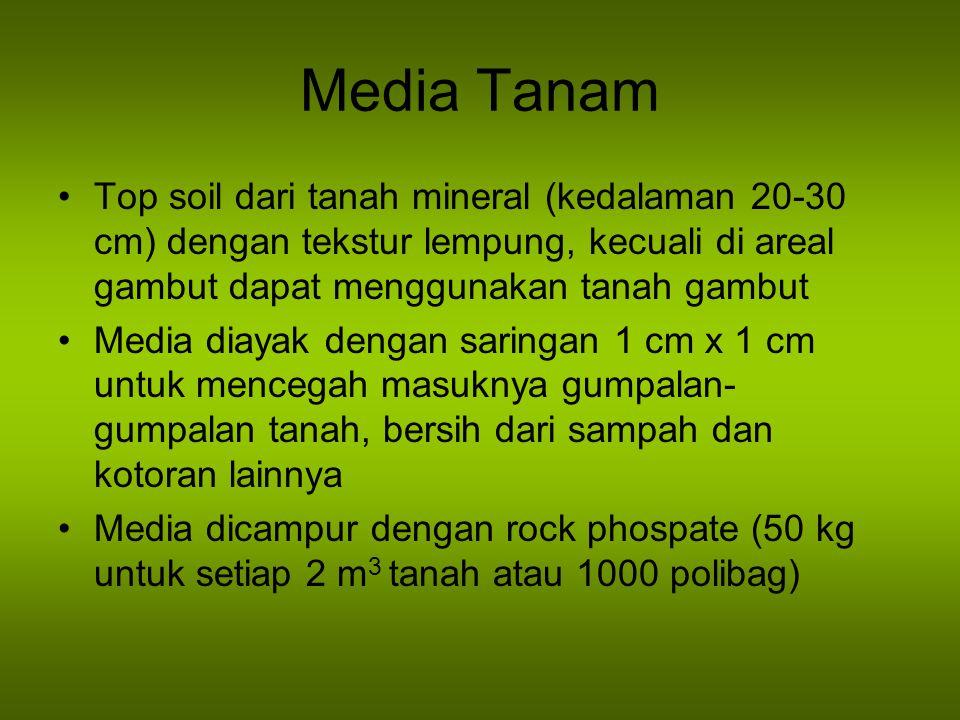 Media Tanam Top soil dari tanah mineral (kedalaman 20-30 cm) dengan tekstur lempung, kecuali di areal gambut dapat menggunakan tanah gambut.