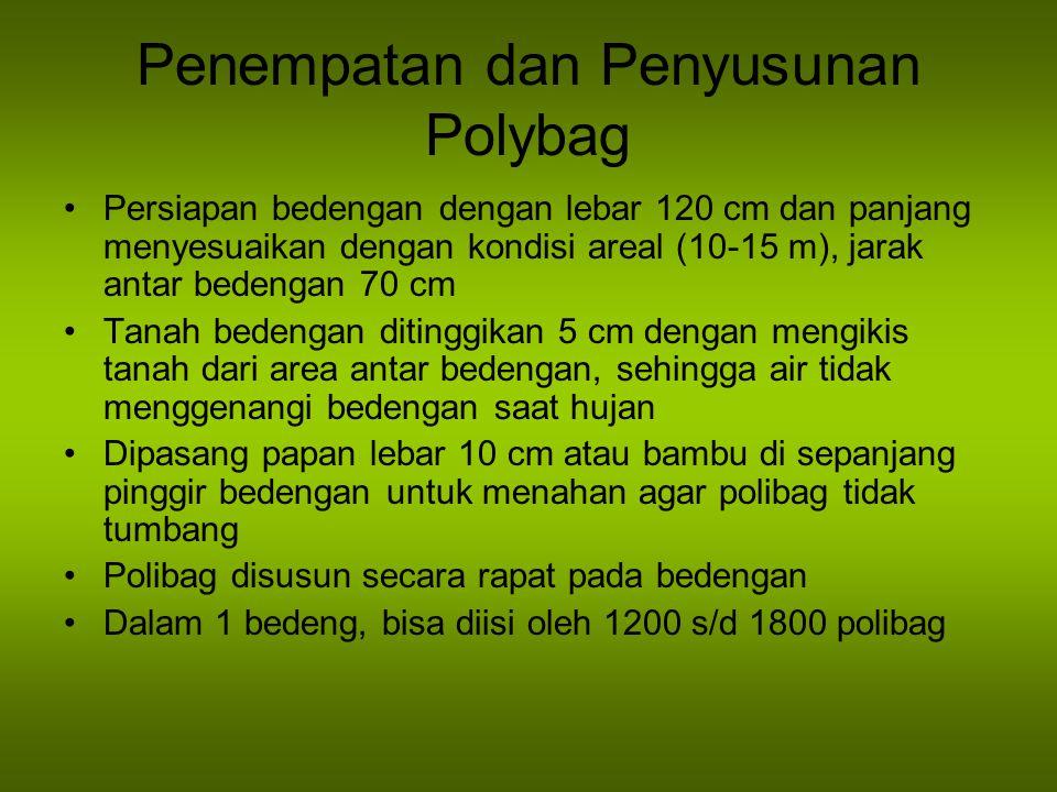 Penempatan dan Penyusunan Polybag