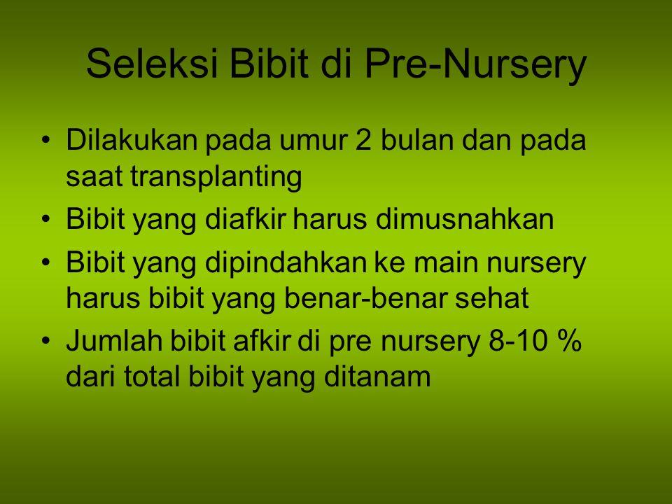 Seleksi Bibit di Pre-Nursery