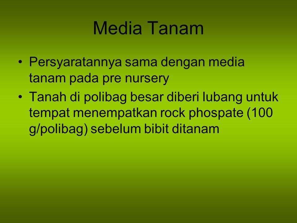 Media Tanam Persyaratannya sama dengan media tanam pada pre nursery