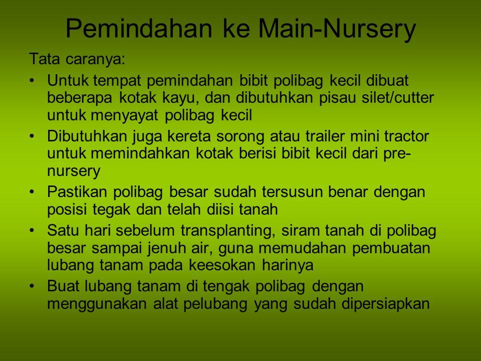Pemindahan ke Main-Nursery