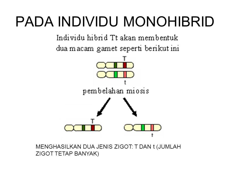 PADA INDIVIDU MONOHIBRID