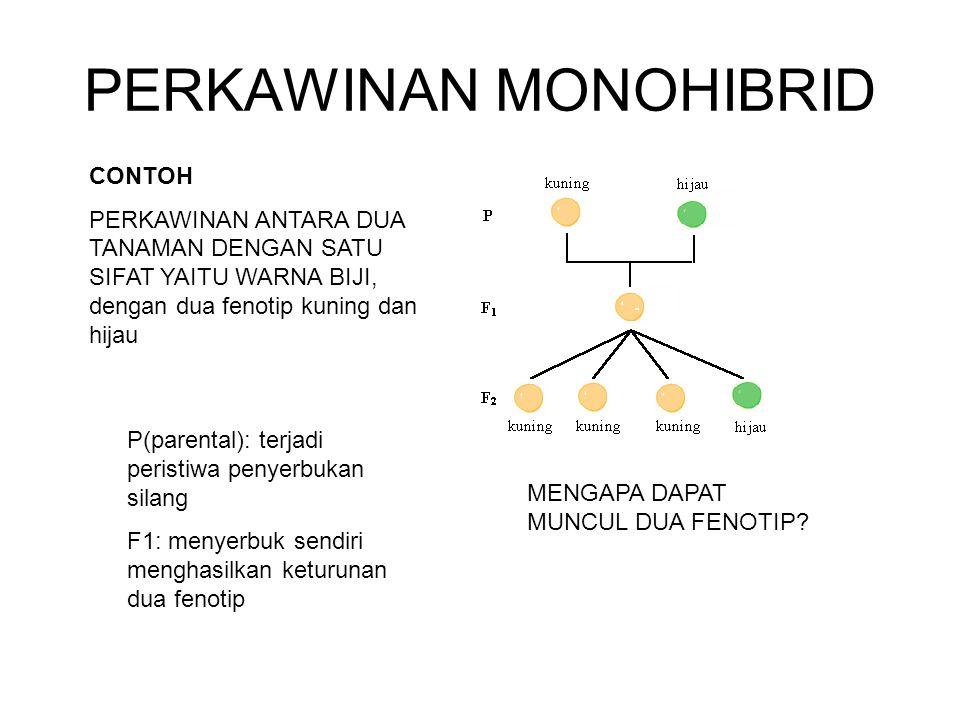 PERKAWINAN MONOHIBRID