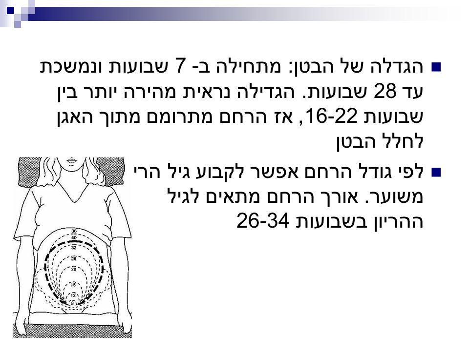 הגדלה של הבטן: מתחילה ב- 7 שבועות ונמשכת עד 28 שבועות