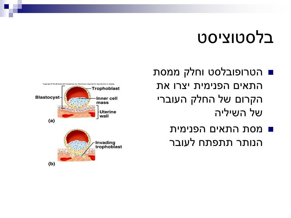 בלסטוציסט הטרופובלסט וחלק ממסת התאים הפנימית יצרו את הקרום של החלק העוברי של השיליה.