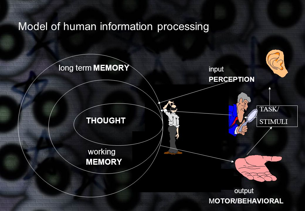 Model of human information processing