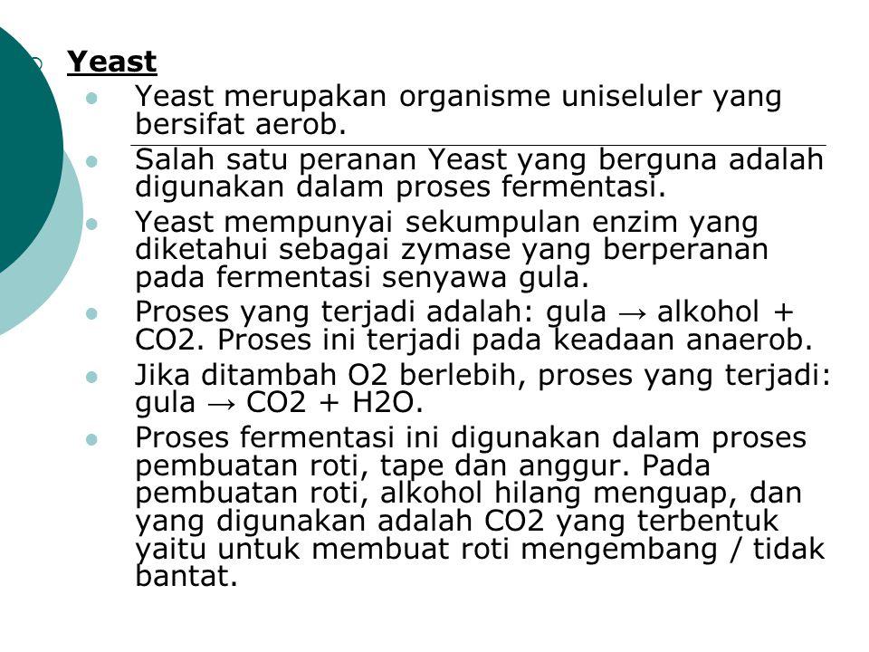 Yeast Yeast merupakan organisme uniseluler yang bersifat aerob. Salah satu peranan Yeast yang berguna adalah digunakan dalam proses fermentasi.