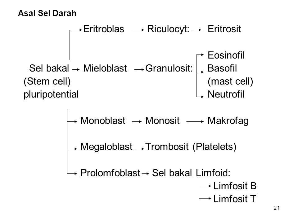 Eritroblas Riculocyt: Eritrosit Eosinofil