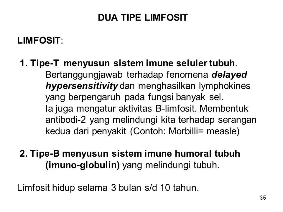 DUA TIPE LIMFOSIT LIMFOSIT: 1. Tipe-T menyusun sistem imune seluler tubuh. Bertanggungjawab terhadap fenomena delayed.