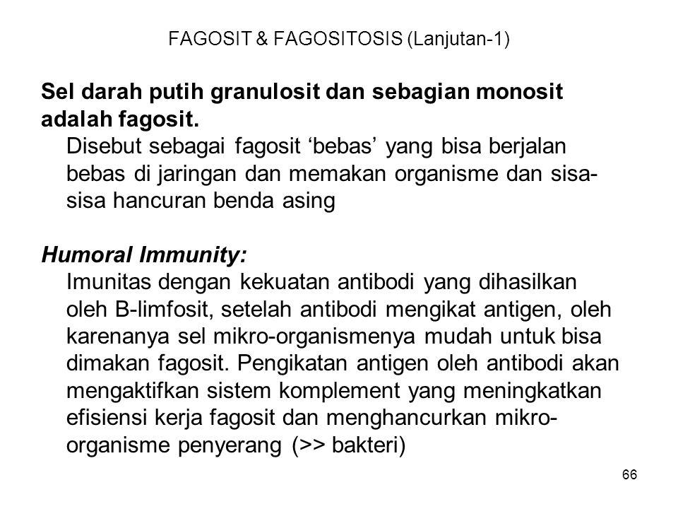 FAGOSIT & FAGOSITOSIS (Lanjutan-1)