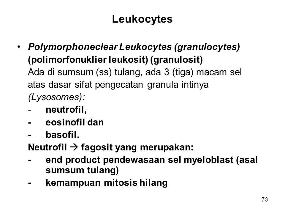 Leukocytes Polymorphoneclear Leukocytes (granulocytes)