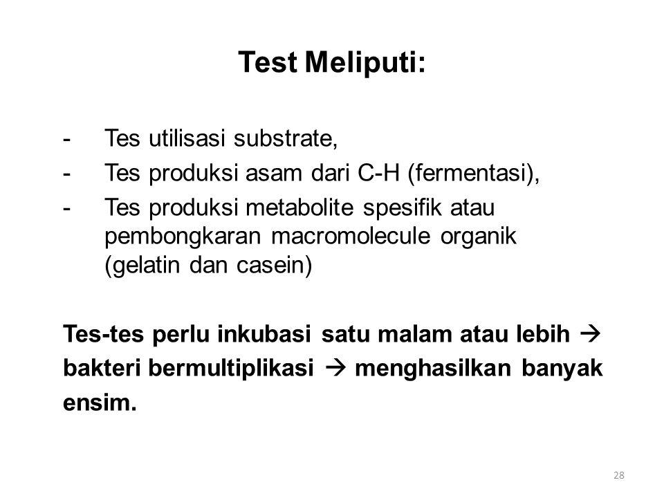 Test Meliputi: