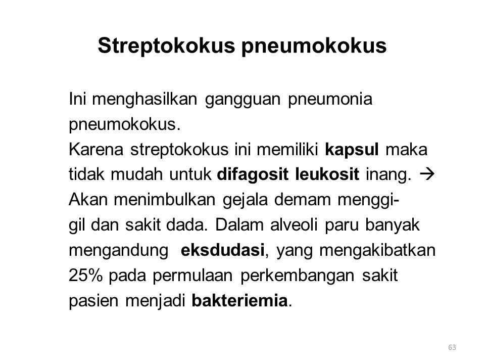 Streptokokus pneumokokus