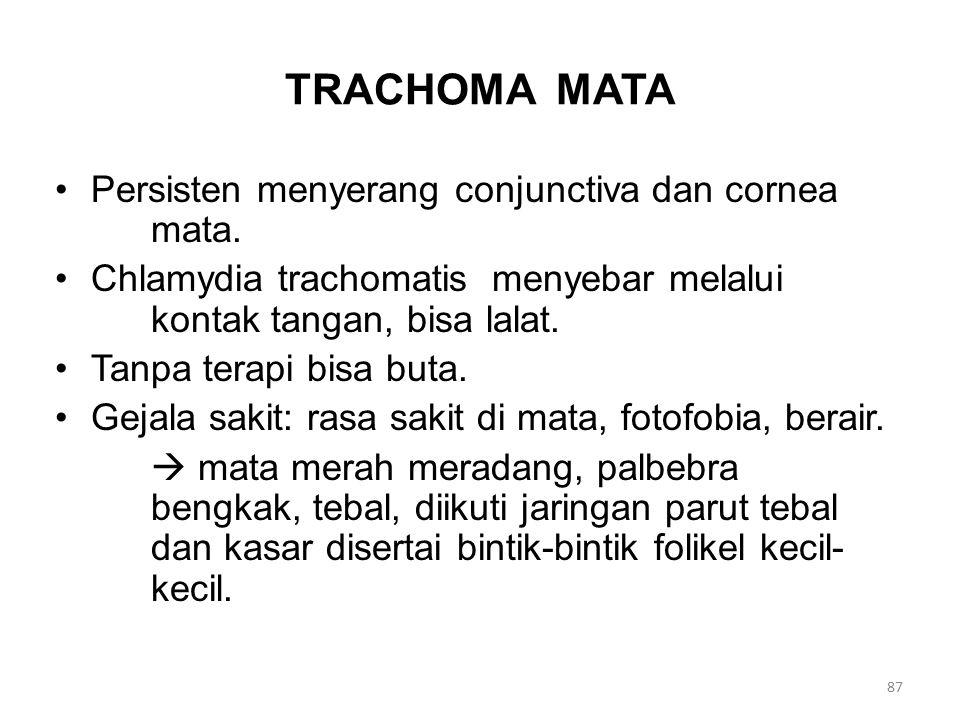 TRACHOMA MATA Persisten menyerang conjunctiva dan cornea mata.