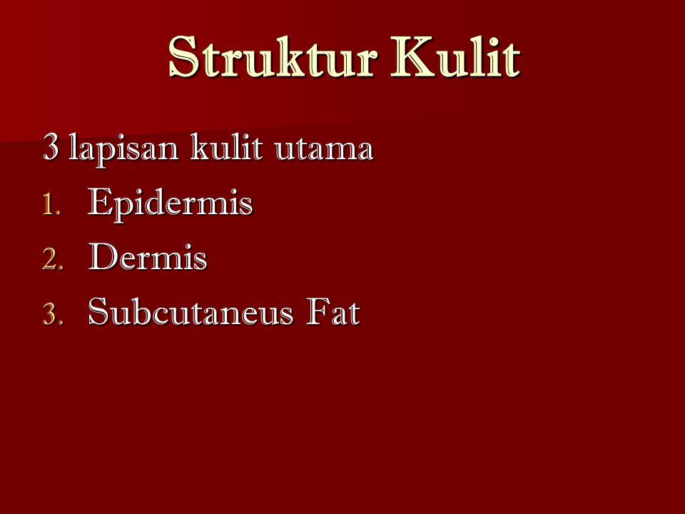 Struktur Kulit 3 lapisan kulit utama Epidermis Dermis Subcutaneus Fat