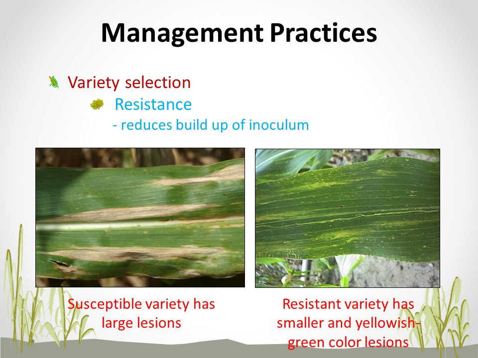 Management Practices Variety selection Resistance