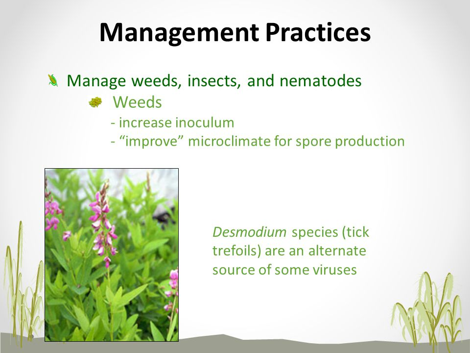Management Practices Manage weeds, insects, and nematodes Weeds