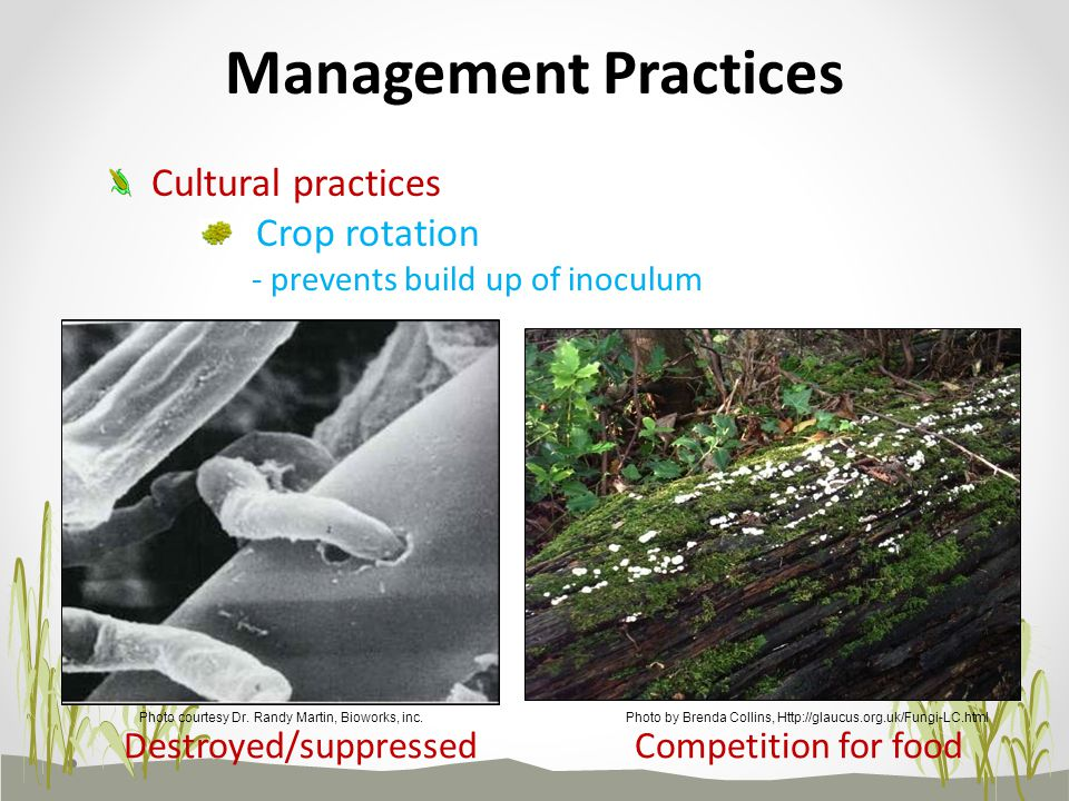 Management Practices Cultural practices Crop rotation