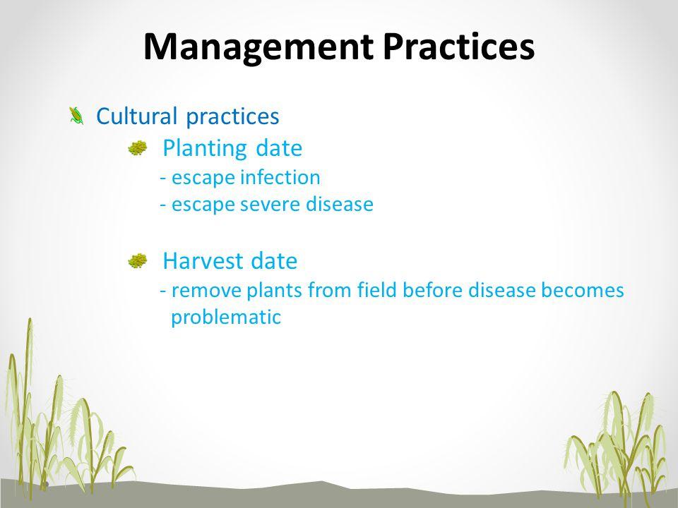 Management Practices Cultural practices Planting date Harvest date
