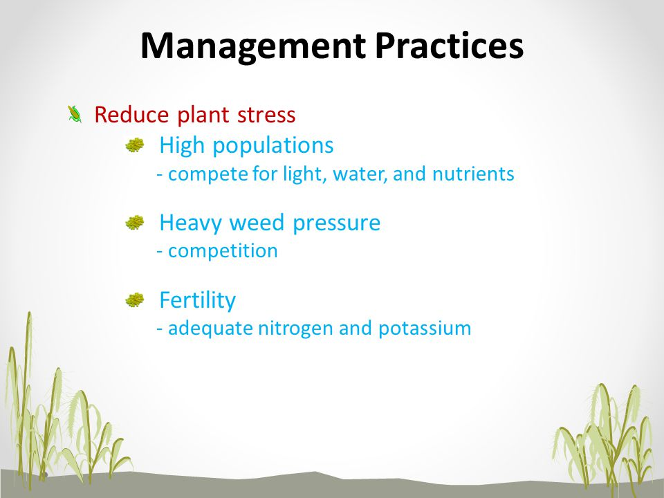 Management Practices Reduce plant stress High populations