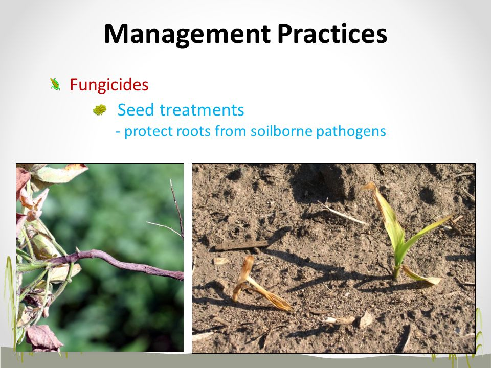 Management Practices Fungicides Seed treatments