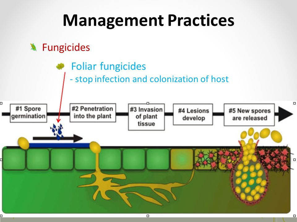 Management Practices Fungicides Foliar fungicides