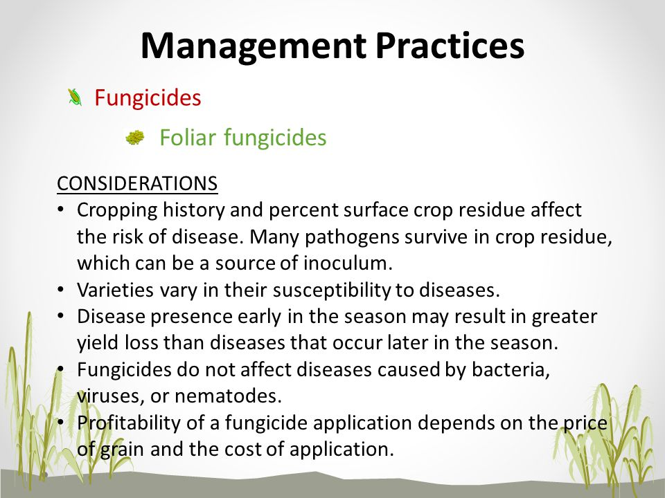 Management Practices Fungicides Foliar fungicides CONSIDERATIONS