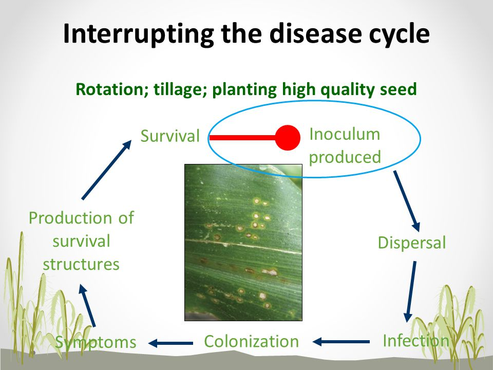 Interrupting the disease cycle