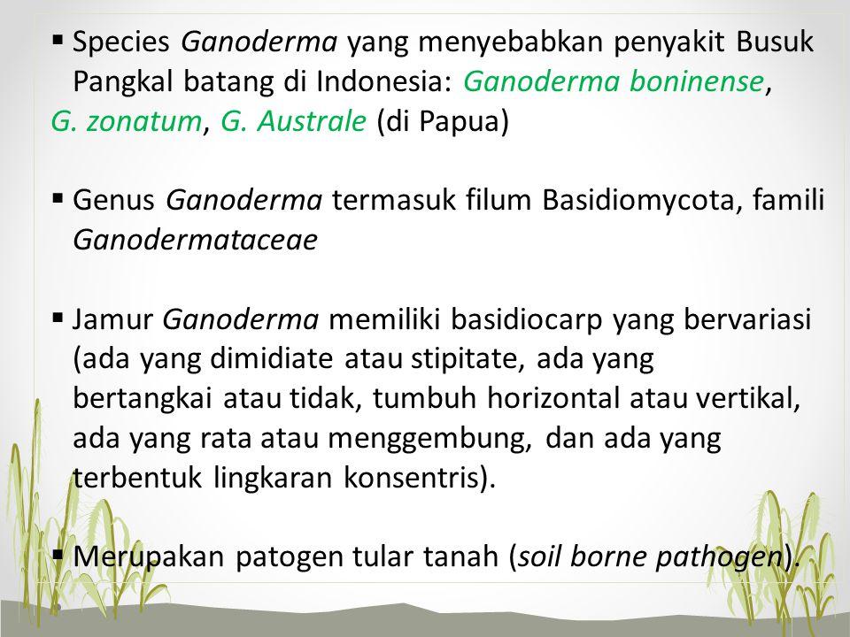 Species Ganoderma yang menyebabkan penyakit Busuk