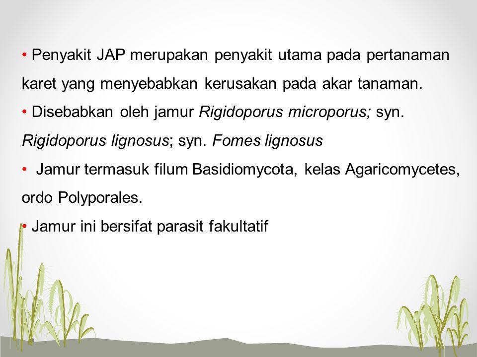Penyakit JAP merupakan penyakit utama pada pertanaman karet yang menyebabkan kerusakan pada akar tanaman.