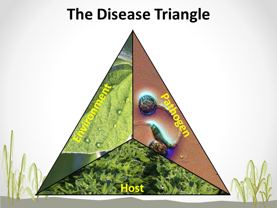 The Disease Triangle Environment Pathogen Host