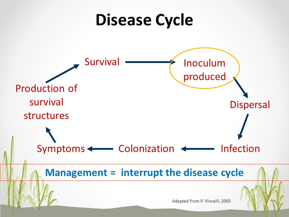 Management = interrupt the disease cycle