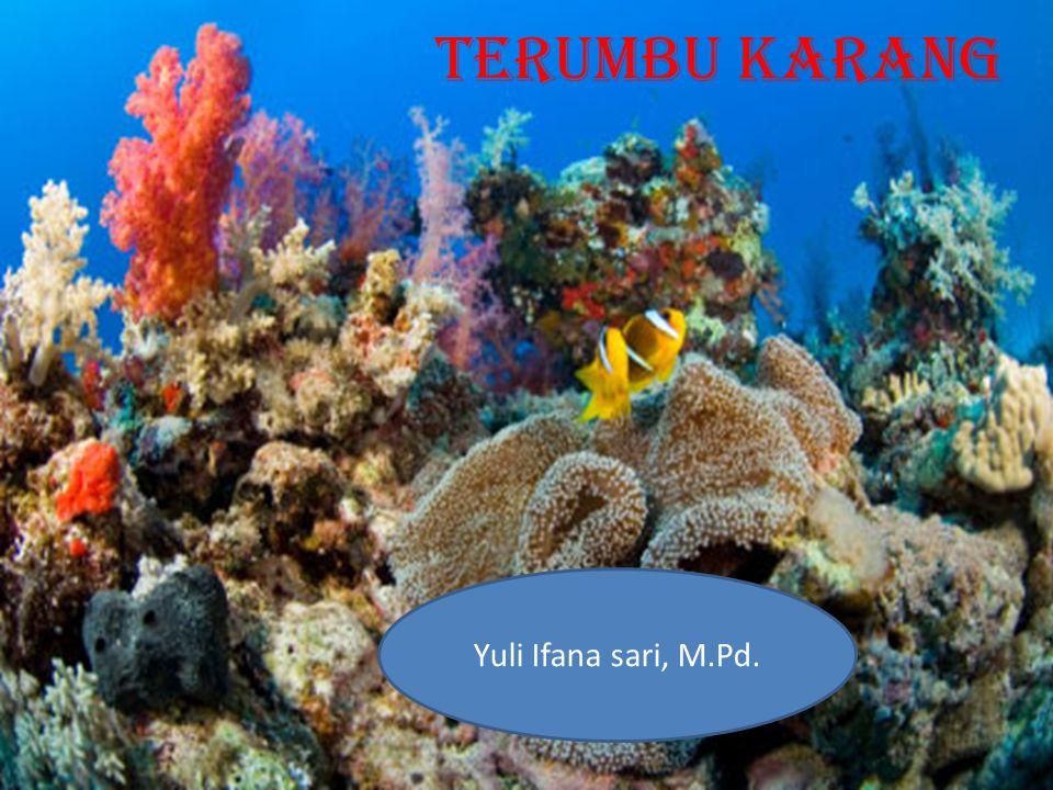 TERUMBU KARANG Yuli Ifana sari, M.Pd.