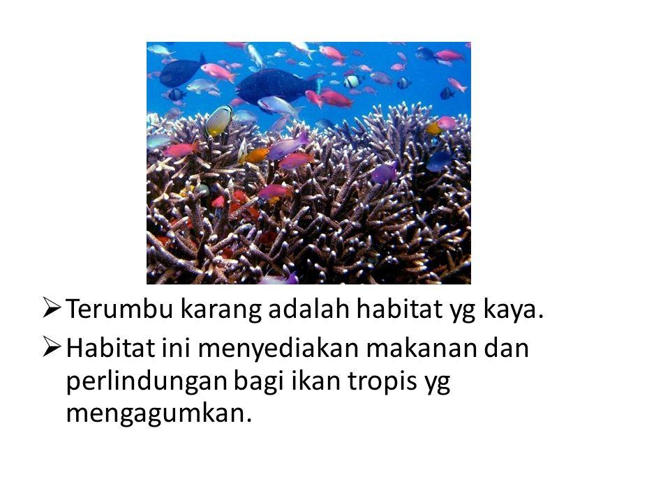 Terumbu karang adalah habitat yg kaya.