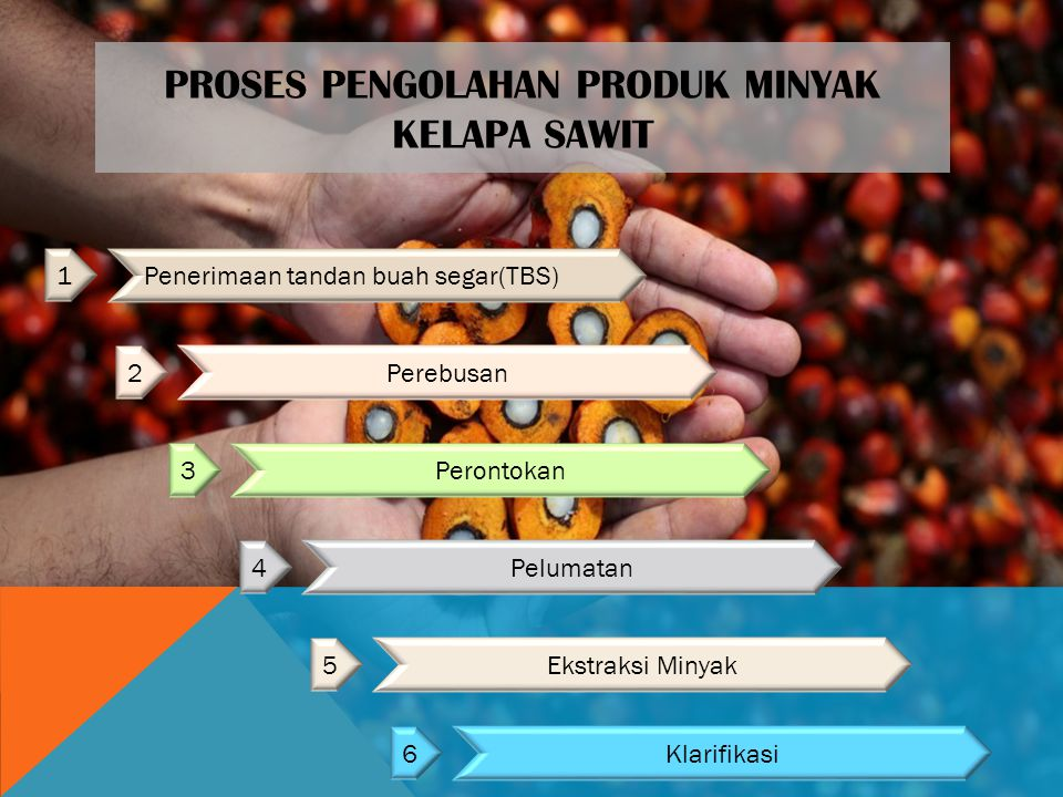 Proses Pengolahan Produk Minyak Kelapa Sawit