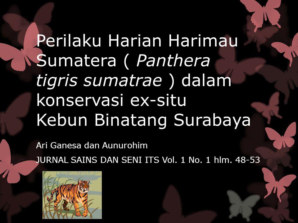 Perilaku Harian Harimau Sumatera ( Panthera tigris sumatrae ) dalam konservasi ex-situ Kebun Binatang Surabaya