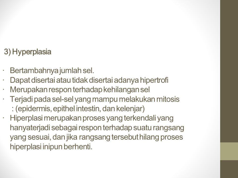 3) Hyperplasia · Bertambahnya jumlah sel