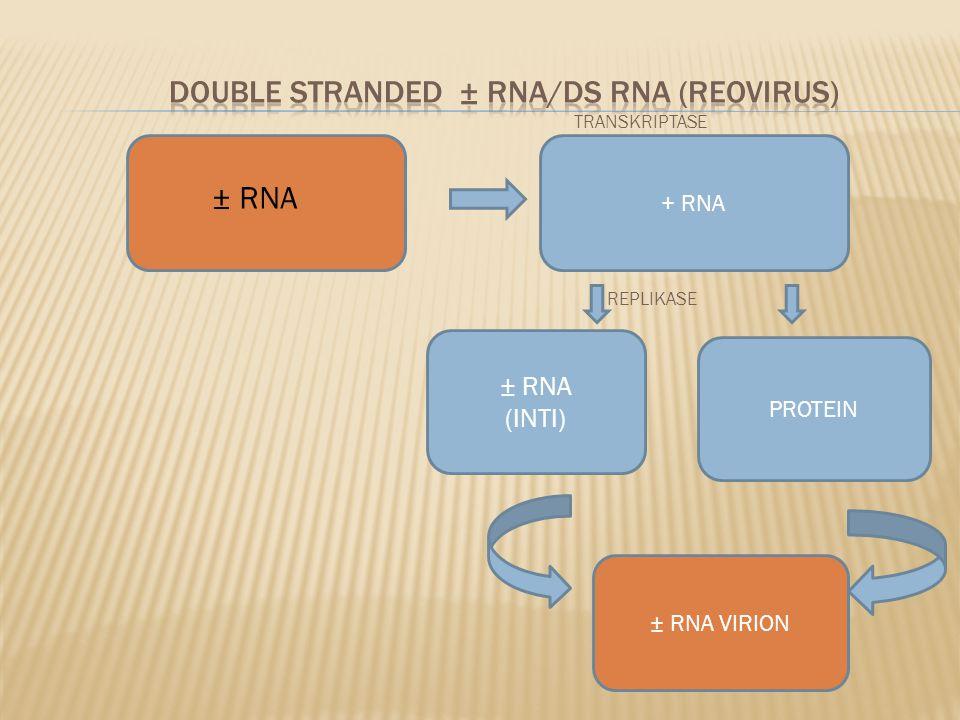 DOUBLE STRANDED ± RNA/DS RNA (REOVIRUS)