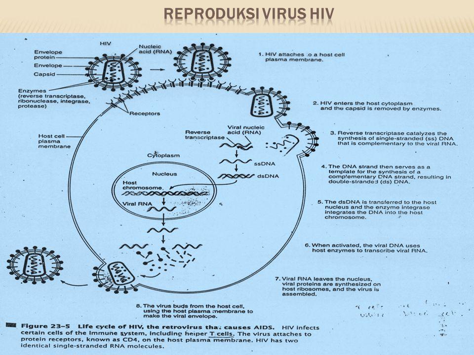 REPRODUKSI VIRUS HIV
