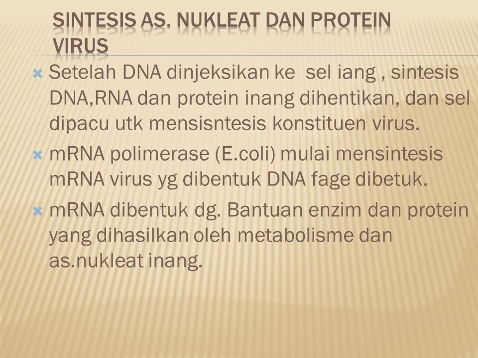Sintesis as. Nukleat dan protein virus