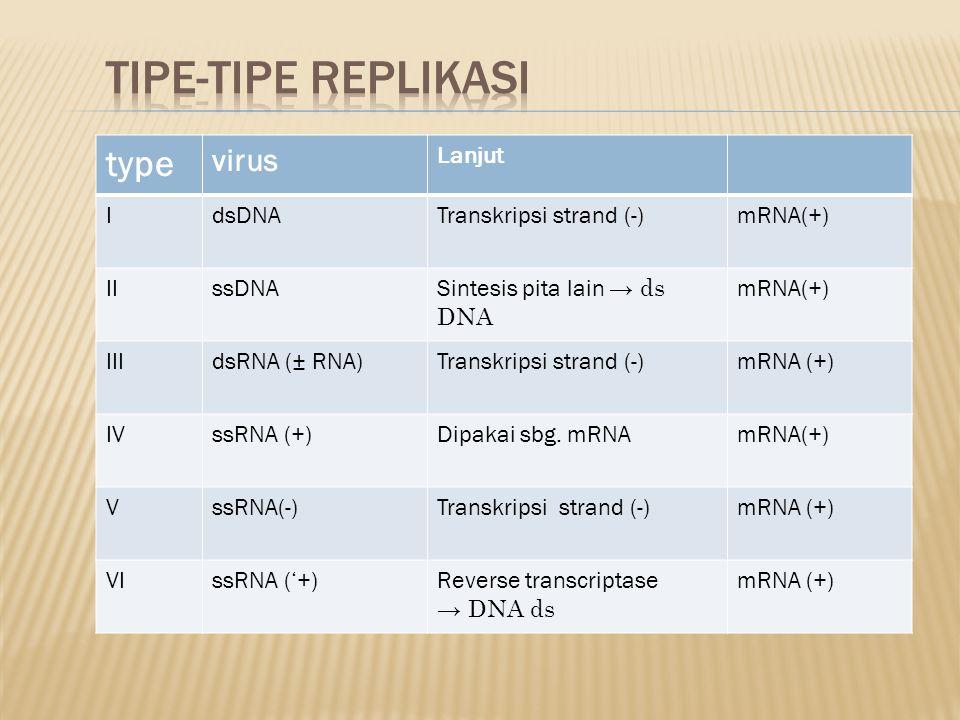 Tipe-tipe replikasi type Virus Lanjut I dsDNA Transkripsi strand (-)