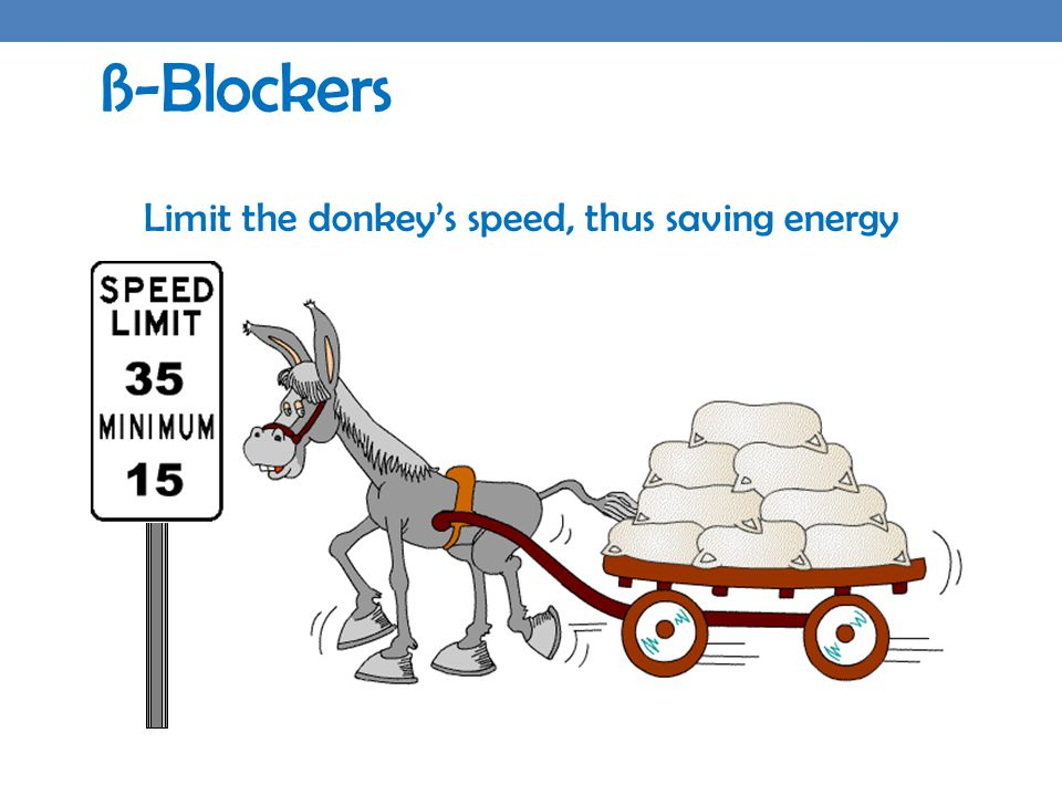 ß-Blockers Limit the donkey's speed, thus saving energy