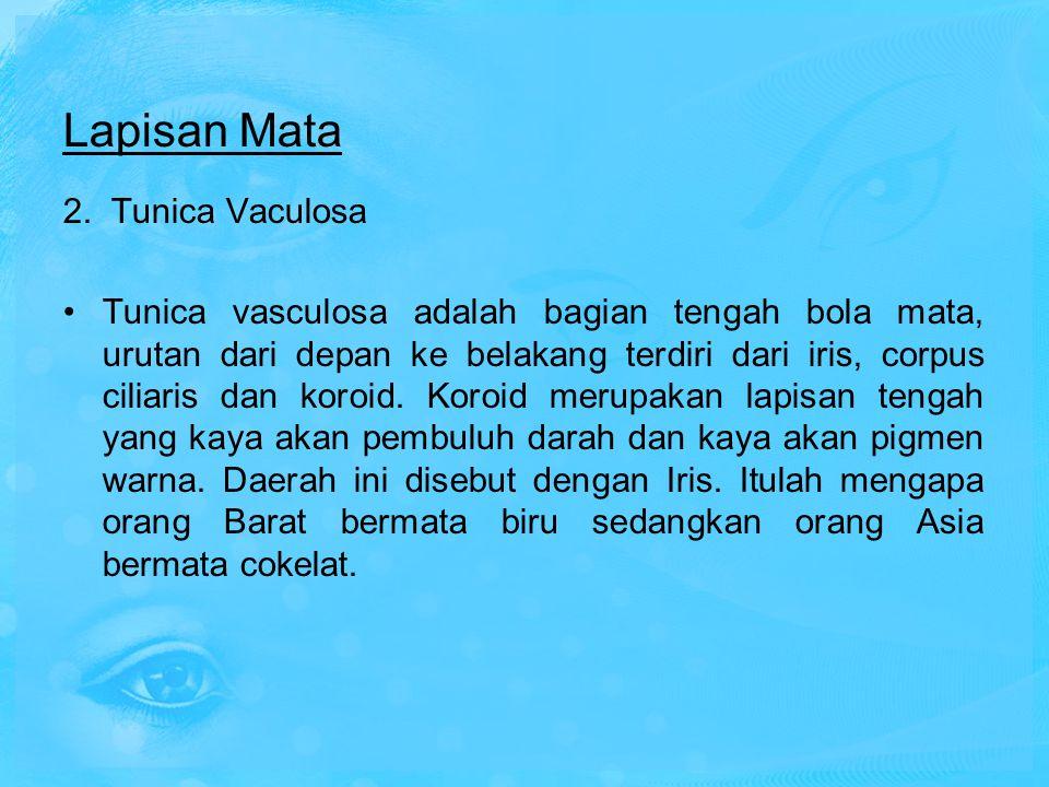 Lapisan Mata 2. Tunica Vaculosa