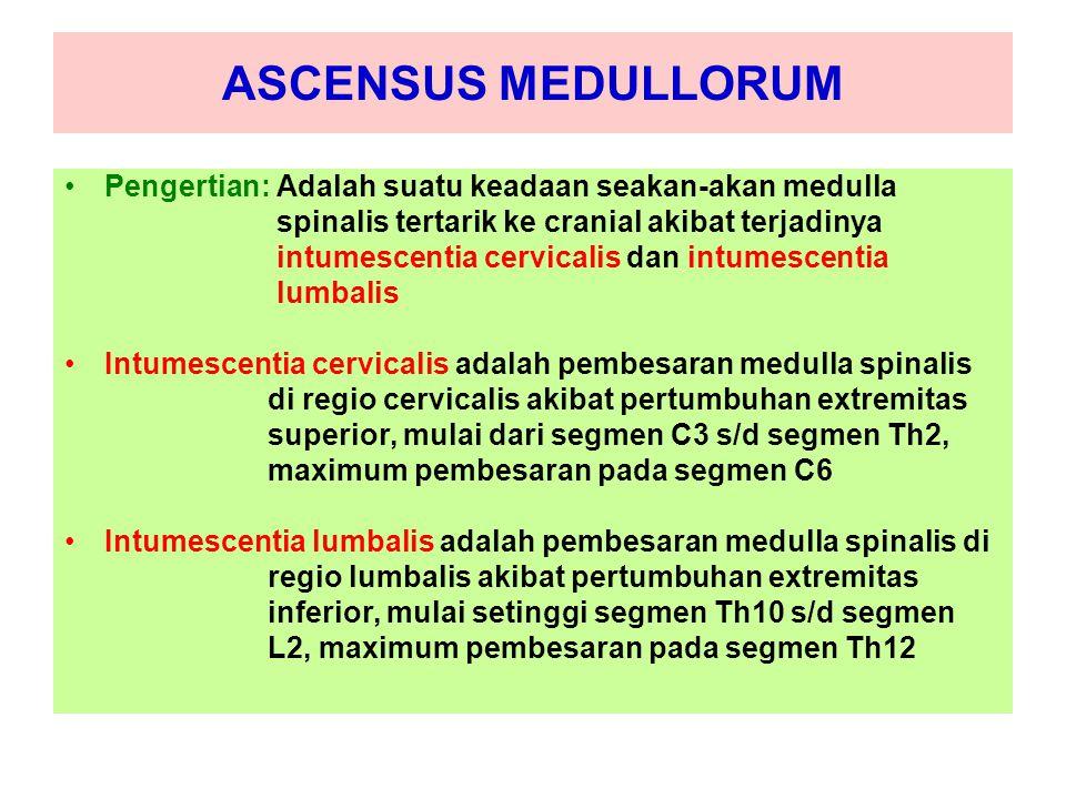 ASCENSUS MEDULLORUM Pengertian: Adalah suatu keadaan seakan-akan medulla. spinalis tertarik ke cranial akibat terjadinya.