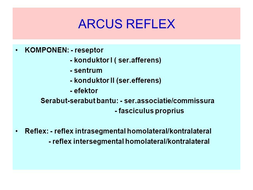 ARCUS REFLEX KOMPONEN: - reseptor - konduktor I ( ser.afferens)