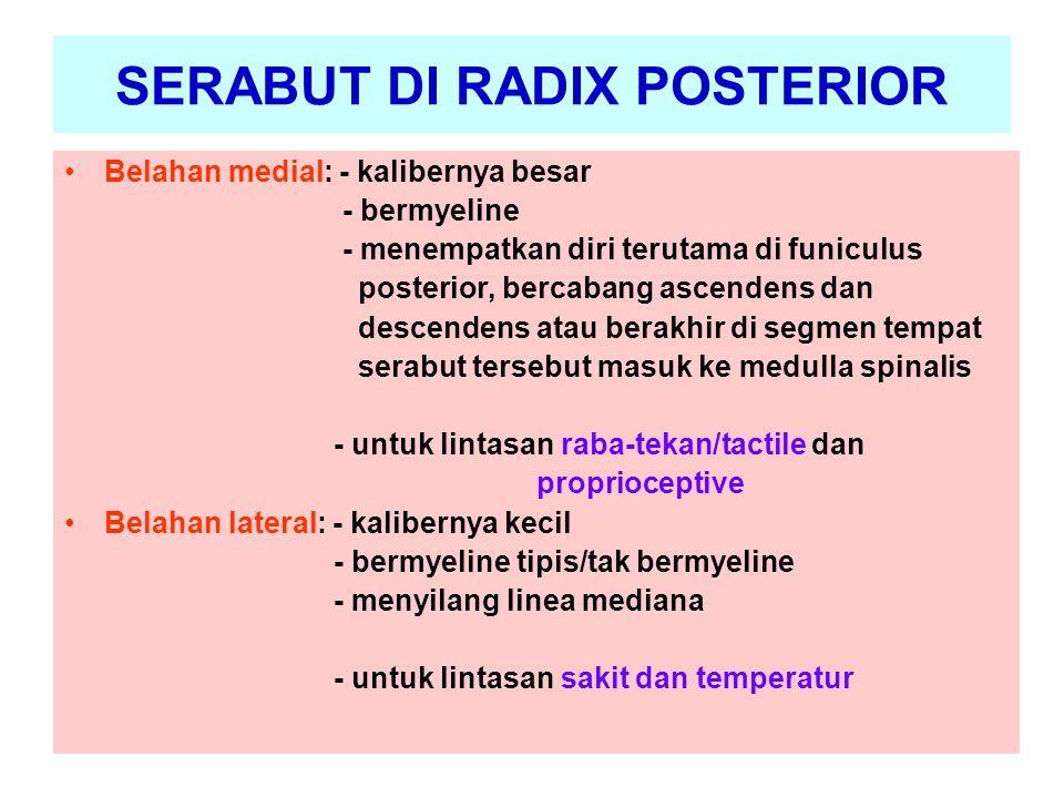 SERABUT DI RADIX POSTERIOR
